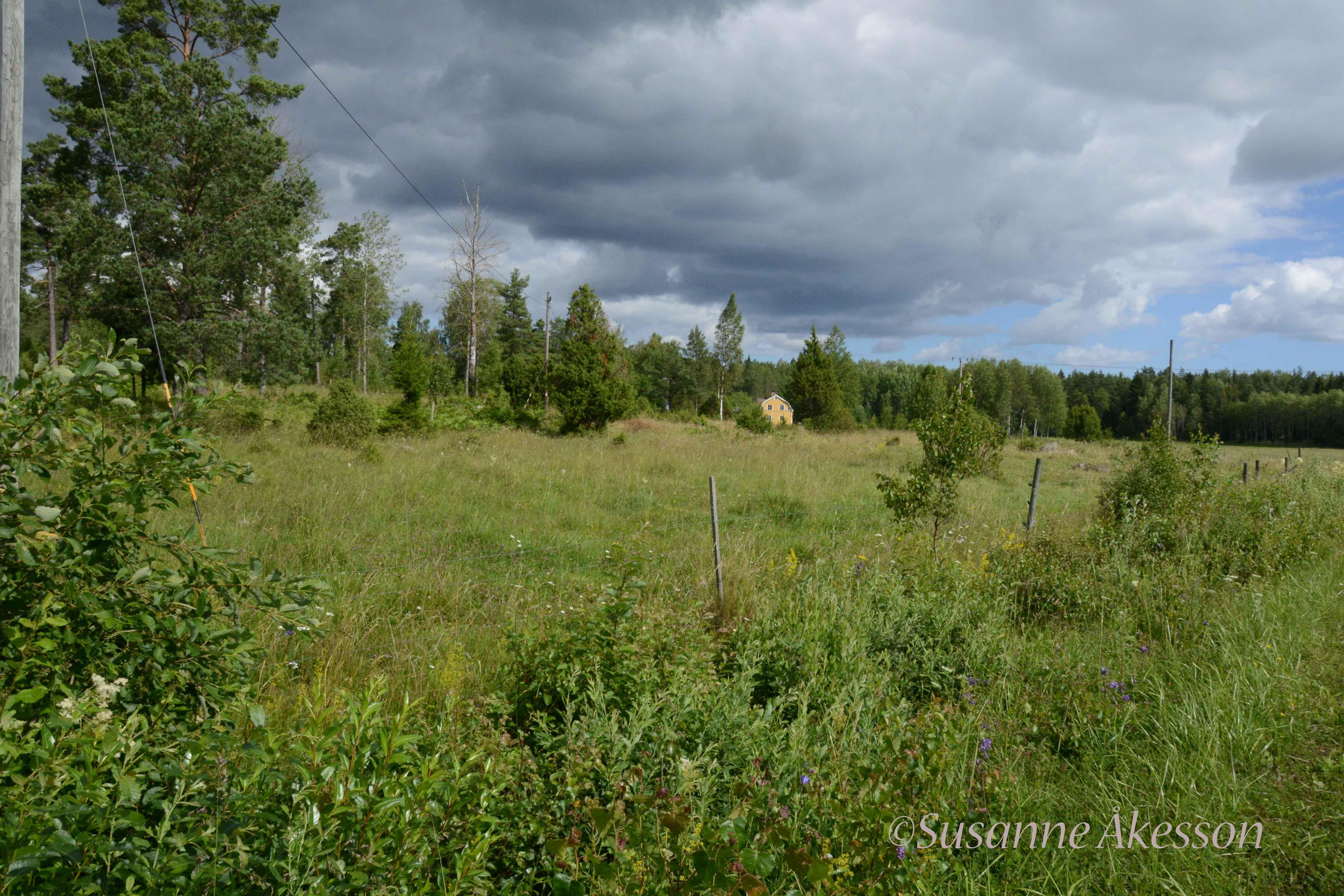 I Hanssons kohage har växtinventeringar visat att det finns extremt många arter på en liten yta. Bland annat växer här fältgentiana, som minskat starkt i Uppland på senare år. Arten kräver obruten hävd och när betet upphör försvinner fältgentianan snart från betesmarken. I Hanssons hage i Ånö har kor betat utan avbrott i flera hundra år.